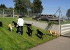 Besuch der Blindenführhunde